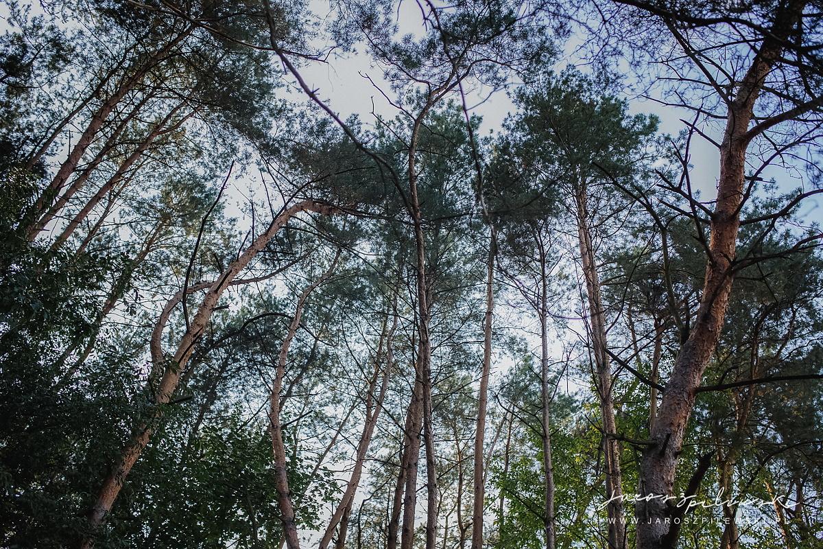 Sesja plenerowa. Drzewa, przyroda.